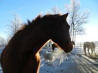 room for rent in country home Horse Pasture board option