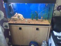 Fluval Roma 200l aquarium fish tank