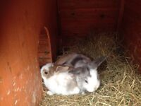 I have 7 baby rabbits needing a loving home 8 weeks old ready to go