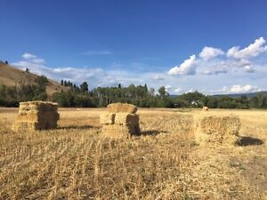 Brome grass bales and oat straw bales