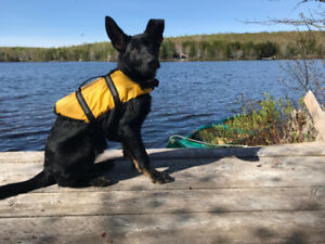 Medium sized Dog Life vest