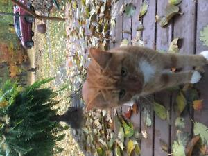 Found cat in Mount Vernon