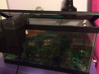 2 Painted Turtles with Tank