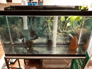 35 gallon aquarium with angelfish pair
