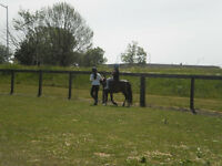 July 30- AUG 1 Horse riding for kids!! 10am - 1pm Micro Day Camp