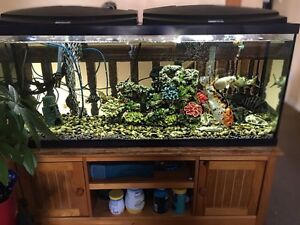 70 gallon tank, stand and accessories