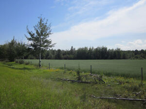 Lush 1/4 Section near Mackay/Chip Lake - Yellowhead County, AB Edmonton Edmonton Area image 1