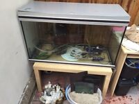 Large 3ft (240ltr) fish tank & everything you need £175 OPEN TO OFFERS
