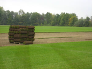 Looking for a Green Lawn this Spring? SOUTHRIDGE SOD