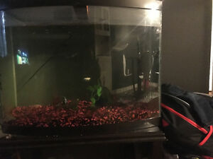Free tank with fishes