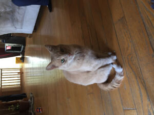 Looking to give a loving cat a new home!