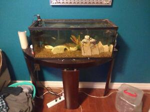 20 Gallon Tank + 1 Molly + 1 Pleco + 9 Zebra Danios + 1 Cory Cat