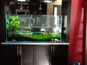 aquarium de luxe AD AMANO DESIGN