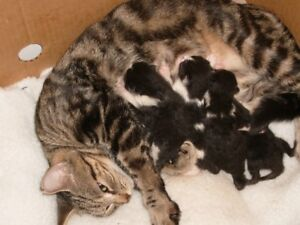 Need good Homes For 6 Kittens.(INSIDE CATS)Only.FREE,