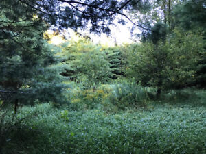99 Acre Parcel of Vacant Land in Mulmur Township
