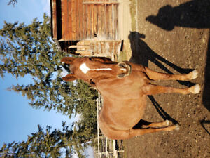 21 year old QH