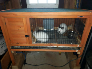 Rabbit hutch and 2 Netherland Dwarf rabbits for $175.