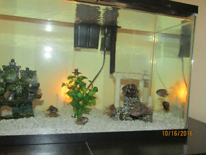 TROPICAL FISH - cichlids - FREE
