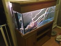 160l tank, a tone of accessories, two map turtles and tropical fish