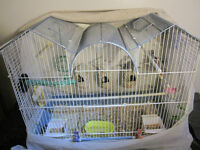 Finches with bird cage