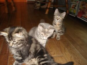 3 Free kittens need home