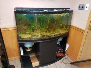 72 gallon bow front aquarium w/ stand for sale -Just add fish!