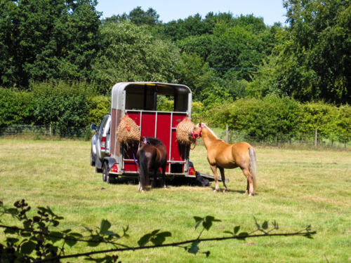 Your Guide to Buying Horse Trailer Accessories