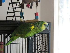 Bird boarding, pet-sitting, and rehoming services in Barrie!
