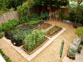 Garden Herb/Veg Plant's 🌱