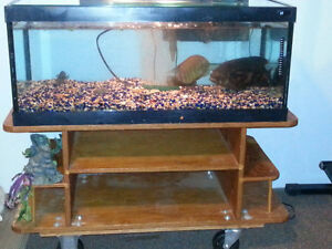 40 Gallon tank for sale with Oscar and cichlids