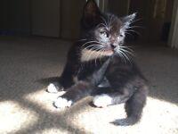 11 week old Tom cat