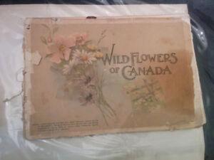 1895 Wild Flowers Of Canada