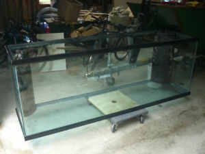Large reef ready Aquarium for sale