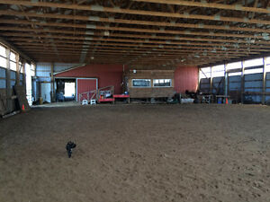 Horses Boarded, Western riding lessons Sarnia Sarnia Area image 5