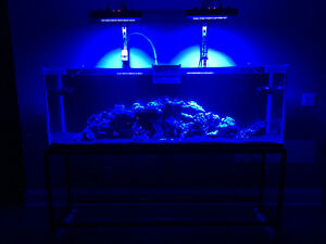 All kinds of LED Aquarium Lighting Available