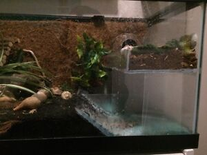 Custom Hermit Crab Tank London Ontario image 3