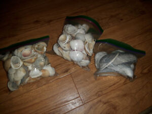 Shells and Nautical Items