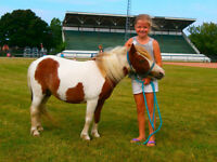 Very Sweet Miniature Mare For Sale