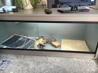 4ft silver vivarium