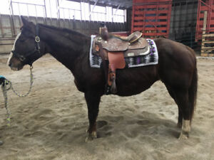 2 Horses / Mares available