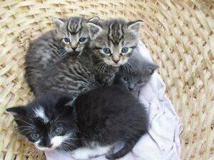 Kitten or Kittens needing a good Home , Free Delivery