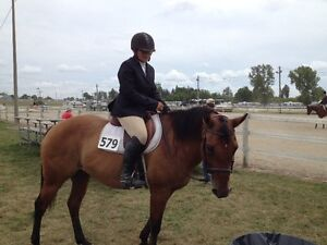 Horses Available for Coboarding Cambridge Kitchener Area image 6