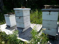 Two Hives with Bees
