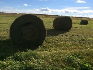 Second cut hay for sale