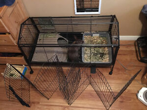 Rabbit with cage and supplies