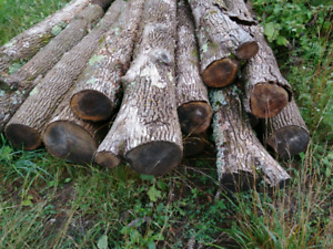 Nice clean Ash Logs for sale