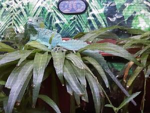 Hi I have 12 to 14 inch Basilisk and  terrarium for sale.