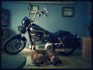 Harley 100em