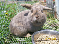5 Rabbits for sale!
