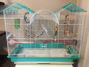 1 year old male budgie with cage & accessories